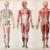 Buikspier mythe: sterke buikspieren zijn niet het medicijn tegen rugpijn. De waarheid ontrafeld.